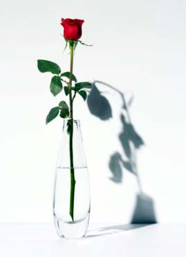 The Rose and the Shadow1.jpg