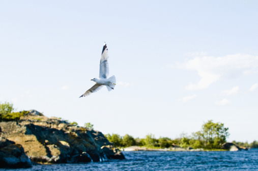 """an analysis of jonathan livingston seagull by richard bach Richard bach the official site  3 thoughts on """" jonathan livingston seagull  it is such a beautiful book and it never ceases to inspire me and encourage me to."""