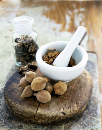 Ayurvedic Herbs and Ingredients