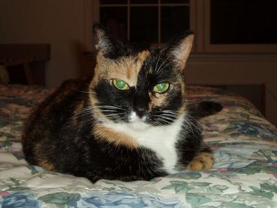 CatSitting1.jpg