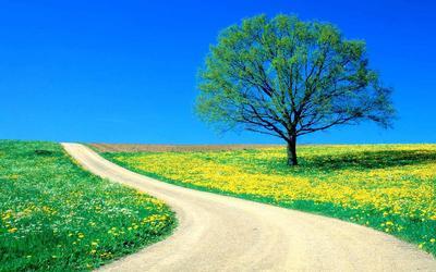 Way-Of-Good-Nature-Photos.jpg