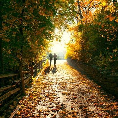 autumn7.jpg