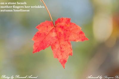 autumn9.jpg
