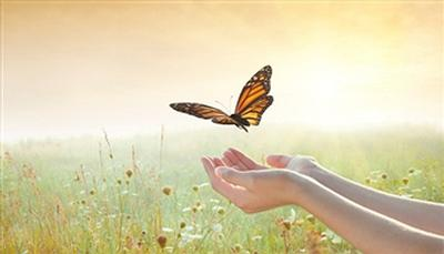 butterfly9.jpg