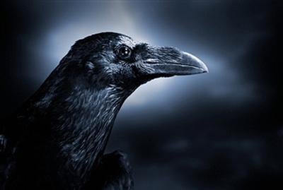 crow2.jpg