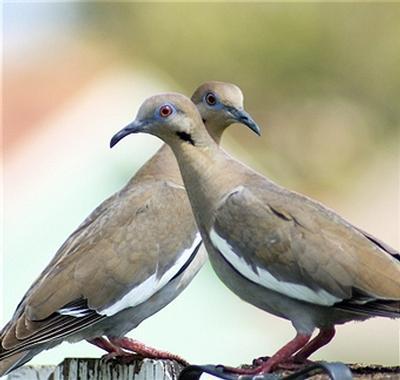 doves1.jpg