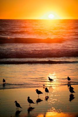 gulls2.jpg