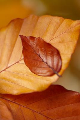 leaf2.jpg
