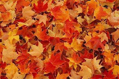 leaves5.jpg