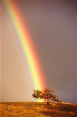 rainbow9.jpg