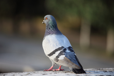 Pigeons - My Friends by Bhavna Mathur